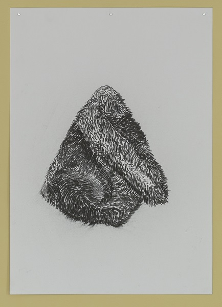 Nicky Coutts, See Nature 1 #2, 2018, charcoal on paper
